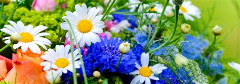 Send Fresh Flowers by Fresh Flowers Send Fresh Flower Gifts In New Zealand