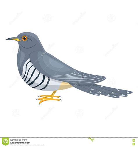Cuckoo Bird Illustration Isolated On White Background