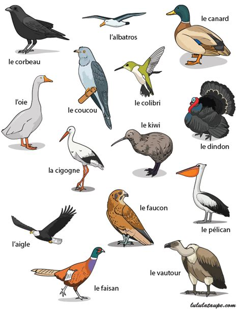 What Color Is Taupe by Fiche 233 Ducative Les Oiseaux 2 Lulu La Taupe Jeux