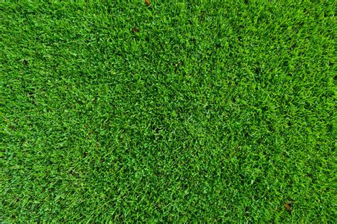 field pattern en francais top view of green grass perspective top view grass ppt