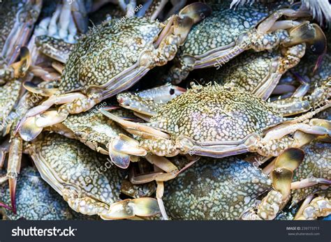 Pdf Where To Buy Fresh Crab by Where To Buy Fresh Crab In Kl