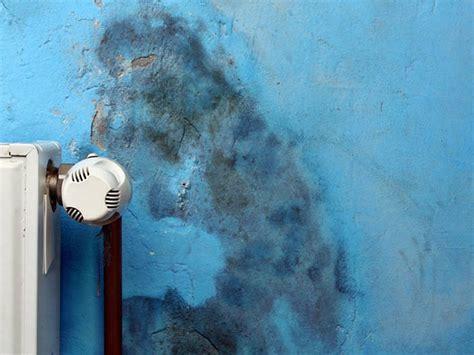 schimmel in der wohnung erkennen schimmel ursachen erkennen sch 228 den beseitigen