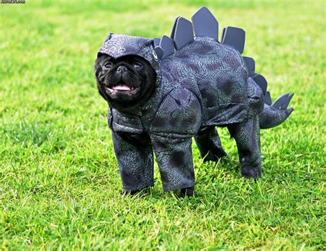 pug dinosaur costume pets in dinosaur costumes 3 ign boards