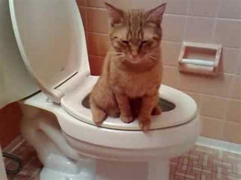 Cat Peed On by Cat In Toilet