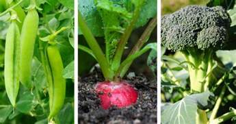 Summer Vegetable Garden Late Summer Vegetable Garden Suggestions By Zone