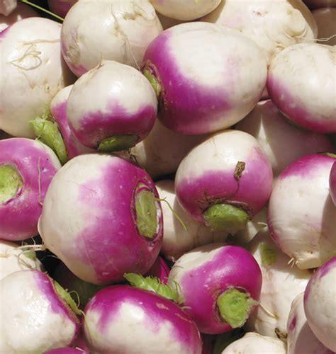 Nabo Bisil how to grow turnips west coast seeds