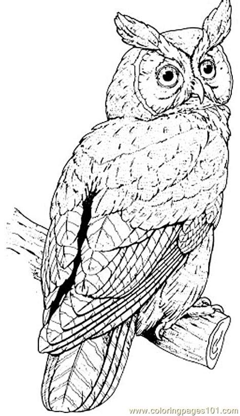 realistic owl coloring page great horned owl coloring page free owl coloring pages