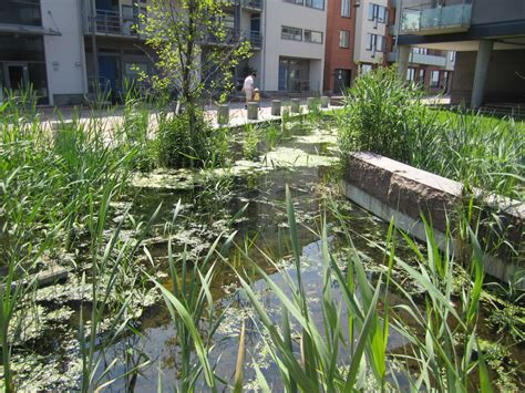 Gardenia Outdoor Design And Build A Garden Cbell Ferrara