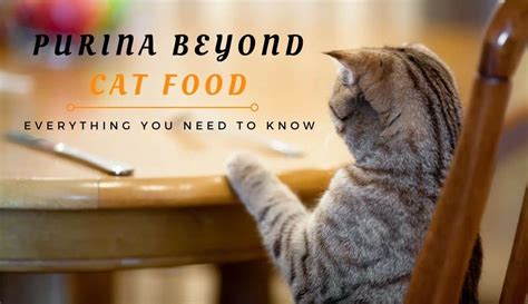purina beyond food review purina beyond cat food review everything you need to tinpaw