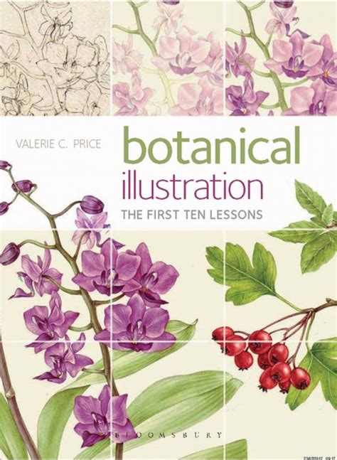 botanical illustration the ten lessons valerie c