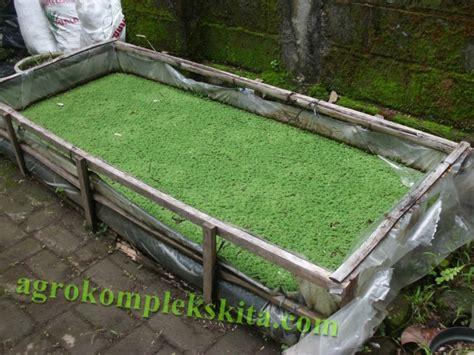 1kg Pupuk Sp Superposfot budidaya azolla untuk pakan ternak agrokompleks mmc
