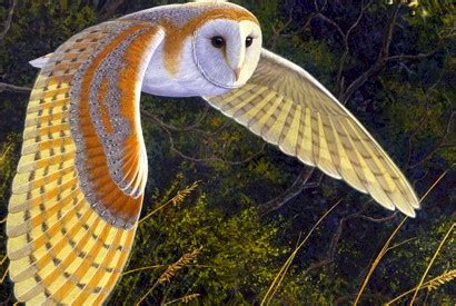 Barn Owl Noise Owl Wings May Inspire Stealthier Aircraft