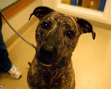 adopt a puppy maryland adopting a pet montgomery county maryland md cat adoption germantown vet