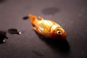 Matt Of All Trades: That  Goldfish Ain't Narcing to No Copper!