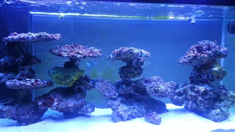 saltwater aquascape reef tank aquascaping on pvc youtube
