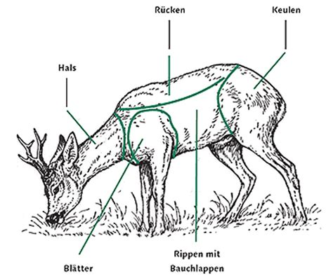 come si cucina il capriolo in umido edoardo mori la cucina della selvaggina nelle dolomiti
