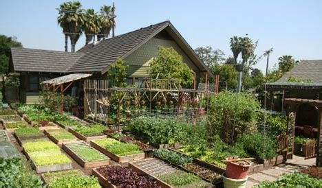 backyard self sufficiency livingtreecommunity com editorial part time nation