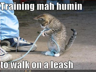Jo In Leashes M a cat to walk on a leash cat lover cat