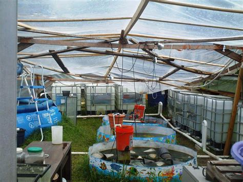 backyard farming on an acre aquaponic wikiwand backyard farming on an acre ideas