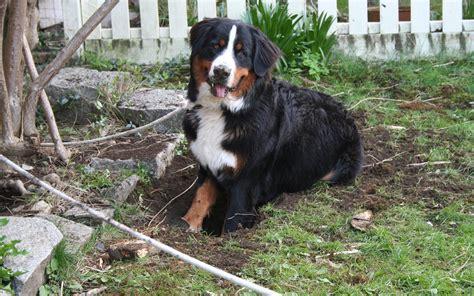 cani da giardino in giardino 5 step per la sua progettazione