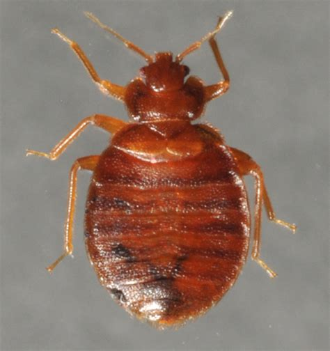 smoking bed bugs kids smoking bed bugs bed bug high 28 images kids are now