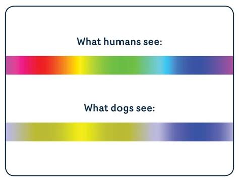 what colors can dogs see dogs do see colours but which colours absolute pets