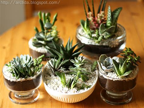 succulent centerpieces diy google search 7 succulent gardens you can create blissfully domestic