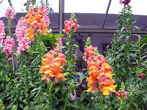 top 28 zone 6 annuals perennials for shady gardens zone 9 orange county master plants for