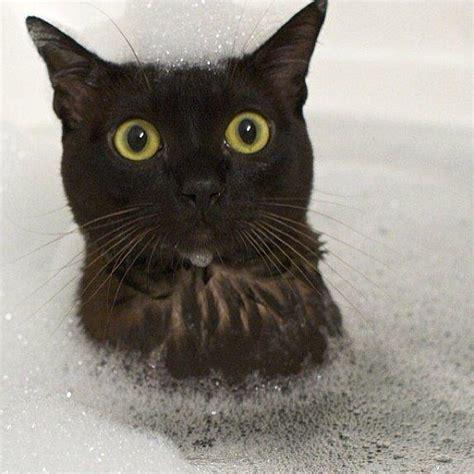 des chats trop marrants dans leur bain