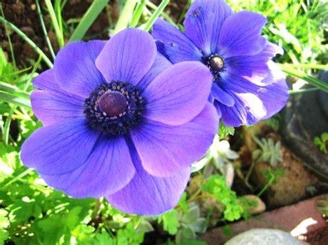 fiori per aiuole invernali piante da giardino con fiori con piante e fiori