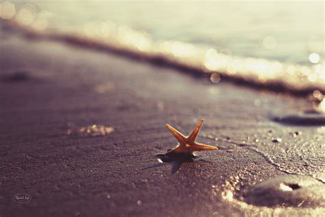 Starfish Home Decor beach photography beach nautical home decor by libertadleal