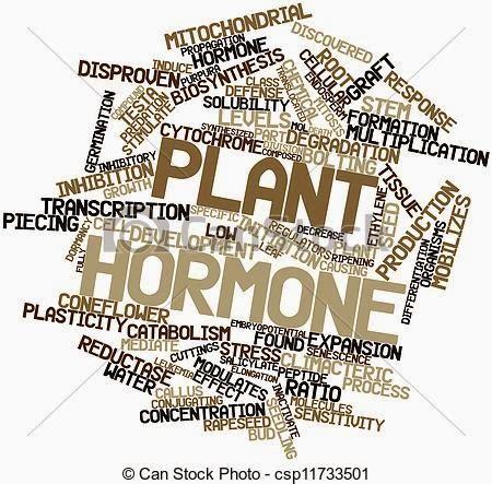 Hormon Zpt Organik hormon tumbuhan atau zpt zat pengatur tumbuh cara budidaya