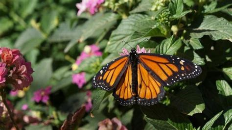botanical gardens butterfly exhibit butterfly exhibit botanical gardens desert botanical