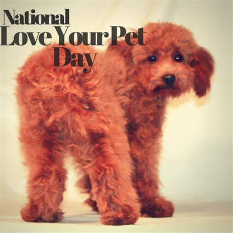 national love  pet day february  scarlets