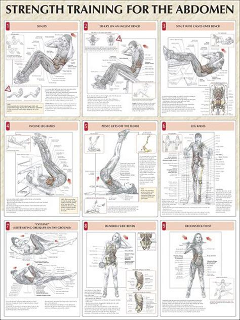 weight bench exercise chart curl up