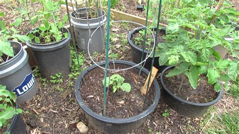 Small Space Container Gardening With 5 Types Of Vegetables Types Of Vegetable Gardening