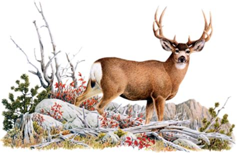 möbel herten ciervo gif animado gifs animados ciervo 112943