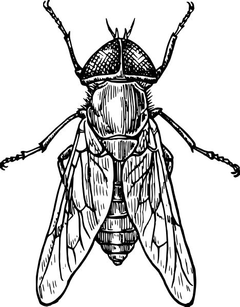 insect clipart black and white clipart panda free