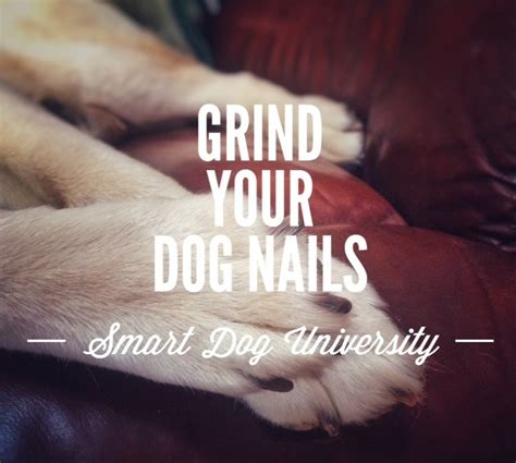 dremel for dogs nail trims part 5 how to trim your s nails with the dremel smart