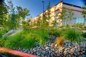 Flowering Bushes For Partial Sun - low maintenance plants for your commercial landscape gro