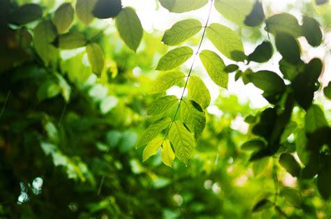 imagenes de naturaleza verdes fondos de pantalla 4233x2811 rama follaje verde naturaleza