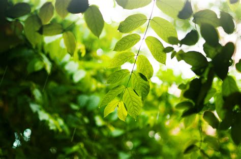 imagenes para pc naturaleza fondos de pantalla 4233x2811 rama follaje verde naturaleza
