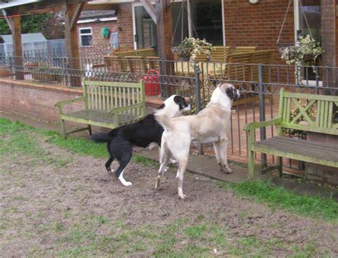 cani da giardino quanti cani da guardia necessitano in giardino