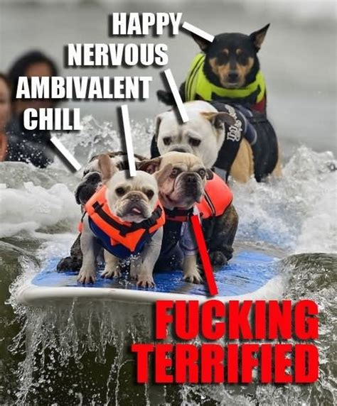 Surf Shirt Meme - dogs fighting funny meme picture for facebook