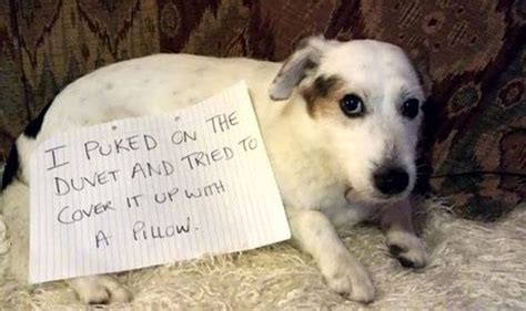 can dogs laugh i all the balls in the neighbourhood confessions to make you giggle