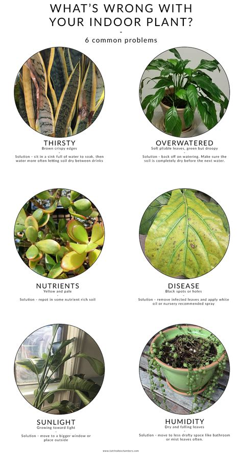 common house plants problems what s wrong with your house plant 6 common problems