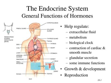 Ppt The Endocrine System General Functions Of Hormones Endocrine System Powerpoint