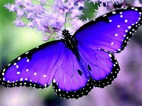 Buttering Flutterbies 2 by 25 Best Ideas About Butterflies On Beautiful
