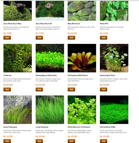 Harga Batu Lava Aquascape kebunbibit jual tanaman aquascape