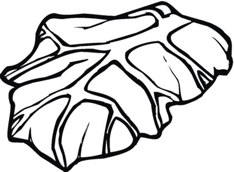 lettuce leaf coloring page 301 moved permanently